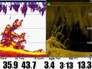 Humminbird Down Image DI Tree with 2D SwitchFire